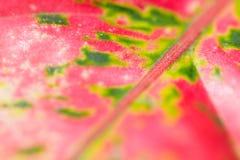 Fondo suave del extracto del foco de la hoja roja y verde Fotos de archivo
