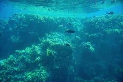 Fondo subacqueo del fondale marino profondo acquatico fotografia stock libera da diritti