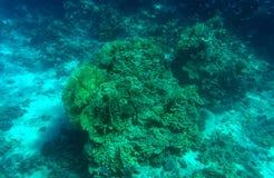 Fondo subacqueo del fondale marino profondo blu acquatico immagine stock
