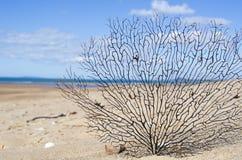 Fondo subacqueo della barriera corallina Fotografia Stock