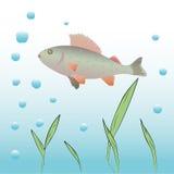 Fondo subacqueo di vettore. Immagine Stock