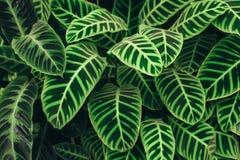 Fondo succoso delle foglie verdi di contrasto Immagine Stock Libera da Diritti