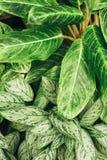 Fondo succoso delle foglie verdi di contrasto Fotografia Stock
