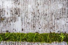 Fondo sucio con el detalle verde Foto de archivo libre de regalías