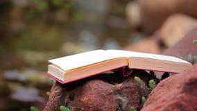 fondo suculento de la planta del río de la piedra del libro nadie cantidad del hd metrajes