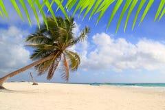 Fondo típico tropical de las palmeras del coco Foto de archivo libre de regalías