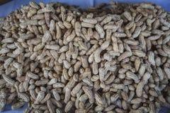 Fondo Tailandia dell'arachide immagini stock