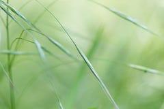 Fondo temático de la hierba abstracta Foto de archivo libre de regalías