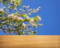Fondo temático de la primavera Foto de archivo