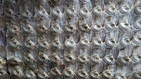 Fondo terrificante di struttura del pesce essiccato Fotografia Stock Libera da Diritti