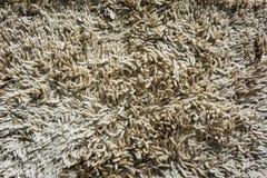 Fondo/textura de la alfombra Fotografía de archivo