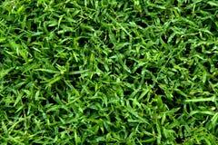 Fondo, textura de la hierba verde imágenes de archivo libres de regalías