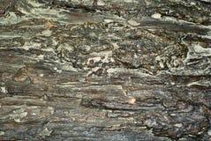 Fondo, textura - superficie de la madera aterrorizada Foto de archivo libre de regalías