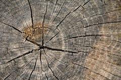 Fondo textured del anillo de árbol Imagenes de archivo