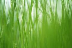 Fondo texturizado de la hierba verde imagenes de archivo