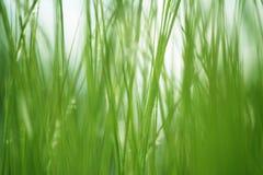 Fondo texturizado de la hierba verde fotografía de archivo