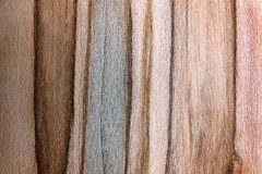 Fondo texturizado de la oscuridad y de Ambrosia Maple Woo rayado ligero Imagen de archivo