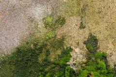 Fondo texturizado de una pared tejada con los rastros de humedad bajo la forma de musgo fungicida y verde verde pintado Imágenes de archivo libres de regalías