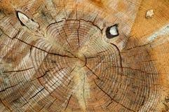 Fondo texturizado del tocón de árbol del primer imágenes de archivo libres de regalías