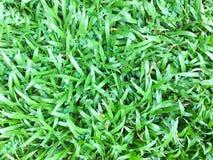 Fondo texturizado modelo verde de la hierba del fondo del césped Fotografía de archivo