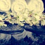 Fondo tonificato delle pietre di zen, prugna di fioritura della stazione termale del ramoscello con refl Immagine Stock