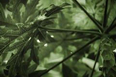 Fondo tonificato verde di vista dal basso delle foglie di palma fotografia stock libera da diritti