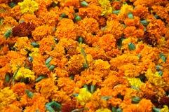 Fondo tradicional de las flores Foto de archivo libre de regalías
