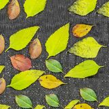 Fondo tricottato del maglione di marrone della lana Il mucchio dell'autunno tricottato copre su fondo di legno, maglioni, lavori  Fotografia Stock Libera da Diritti