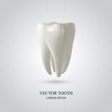 Fondo tridimensional del diente Fotos de archivo