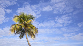 Fondo tropical imagen de archivo libre de regalías