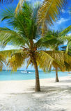 Fondo tropical Imagenes de archivo