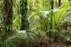Fondo tropical Fotos de archivo libres de regalías