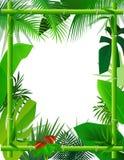 Fondo tropical con el marco de bambú Imagen de archivo libre de regalías