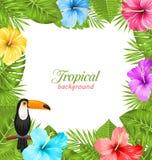 Fondo tropical con el pájaro del tucán, flores coloridas del hibisco Fotos de archivo