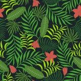 Fondo tropical con las hojas de palma Fotos de archivo libres de regalías