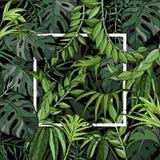 Fondo tropical con las hojas de palma, las plantas de la selva y el marco blanco libre illustration