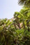 Fondo tropical con las palmeras Imagen de archivo libre de regalías