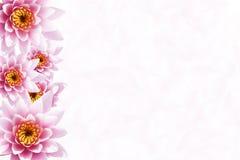Fondo tropical de la flor Imagen de archivo