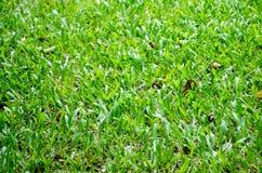 Fondo tropical de la hierba Foto de archivo