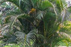Fondo tropical de la palmera imagen de archivo libre de regalías