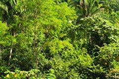 Fondo tropical de la selva imágenes de archivo libres de regalías