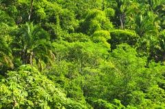 Fondo tropical de la selva Fotos de archivo