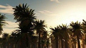Fondo tropical de la selva con las siluetas de la palmera en la puesta del sol almacen de metraje de vídeo