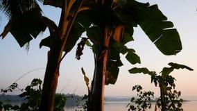 Fondo tropical de la selva con las siluetas de la palmera en la salida del sol almacen de metraje de vídeo