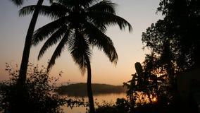 Fondo tropical de la selva con las siluetas de la palmera en la salida del sol almacen de video