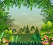 Fondo tropical de la selva con los árboles y las hojas ilustración del vector