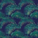 Fondo tropical de las hojas Imagen de archivo libre de regalías