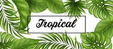 Fondo tropical de las hojas con las plantas de la selva Imagen de archivo