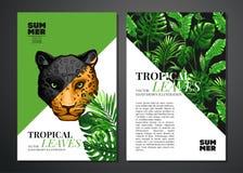 Fondo tropical de las hojas de palma Fotos de archivo libres de regalías