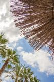 Fondo tropical de palmeras sobre un cielo azul Imagen de archivo libre de regalías